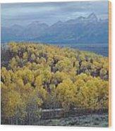 Aspens And The Tetons Wood Print