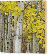 Aspens At Autumn Wood Print by Andrew Soundarajan
