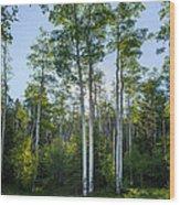 Aspens At Sunrise 1 - Santa Fe New Mexico Wood Print