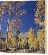 Aspens In Fall - V Wood Print
