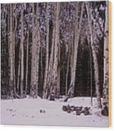 Aspens In Snow Wood Print