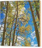 Aspens In The Clouds Wood Print