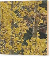 Aspens In The Fall 1 Wood Print