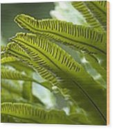 Asplenium Scolopendrium Wood Print by Science Photo Library