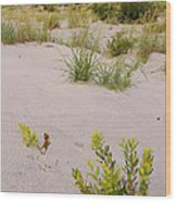 Assateague Dunes 2 Wood Print