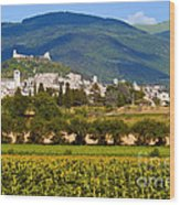 Assisi From The Sunflower Fields Wood Print