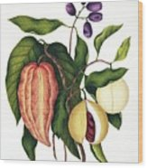 Assorted Edible Indian Plants Wood Print