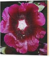 Assorted Flower 004 Wood Print