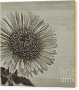 Aster With Textures Wood Print