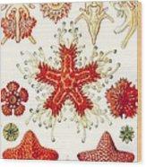 Asteridea Wood Print