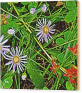 Asters And Scarlet Paintbrush On Swan Lake Trail In Grand Teton National Park-wyoming  Wood Print