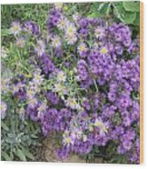 Asters Light And Dark Wood Print