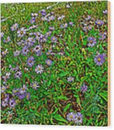 Asters On Heron Lake Trail In Grand Teton National Park-wyoming- Wood Print