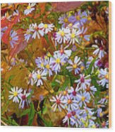 Asters Wood Print