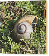 At A Snail's Pace Wood Print