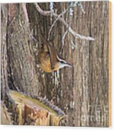 At Home In The Cedars Wood Print