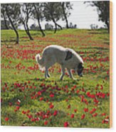 At Ruchama Forest Israel 1 Wood Print