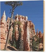 At The Bottom Of The Bryce Np Wood Print