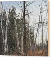 At The Edge Of The Wetland Wood Print