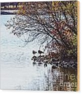 At The Lake-40 Wood Print