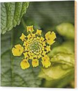 Atlanta Botanical Garden Flowers V9 Wood Print