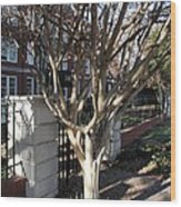 Atlanta Tree Wood Print