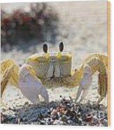 Atlantic Ghost Crab 2760 Wood Print