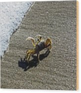 Atlantic Ghost Crab Wood Print