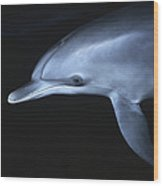 Atlantic Spotted Dolphin Juvenile Wood Print