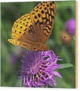Atlantis Fritillary Butterfly Wood Print