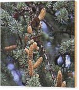 Atlas Cedar (cedrus Atlantica 'glauca') Wood Print