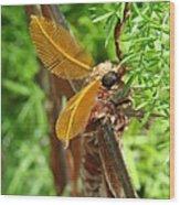Atlas Moth Wood Print