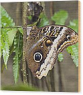 Atreus Owl Portrait  Costa Rica Wood Print