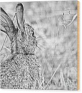 Attentive Hare Wood Print
