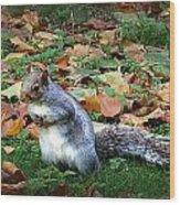 Attentive Squirrel Wood Print