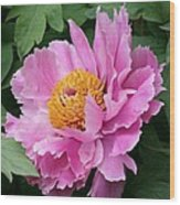 Attractive Pink Peony Wood Print