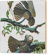 Audubon Chuck-will's Widow Wood Print