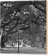 Audubon Park Oaks Wood Print