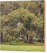 Audubon Park Wood Print