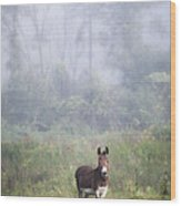 August Morning - Donkey In The Field. Wood Print by Gary Heller