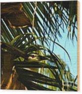 Auku'u The Black Crowned Night Heron Wood Print
