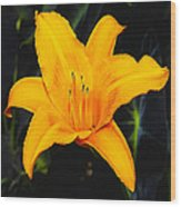 Aurelian Lily Wood Print