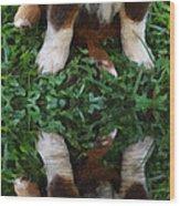 Aussie Double Trouble Wood Print