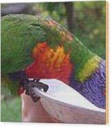 Australia - One Wet Lorikeet Feeding Wood Print