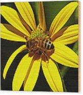 Australian Bee Snacktime Wood Print