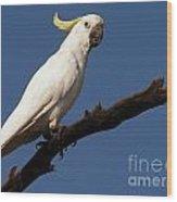 Australian Bird Wood Print