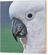 Australian Birds - Cockatoo Up Close Wood Print