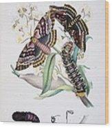 Australian Butterflies Wood Print by Philip Ralley