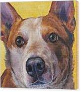 Australian Cattle Dog Red Heeler On Yellow Wood Print