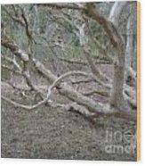 Australian Native Tree 4 Wood Print